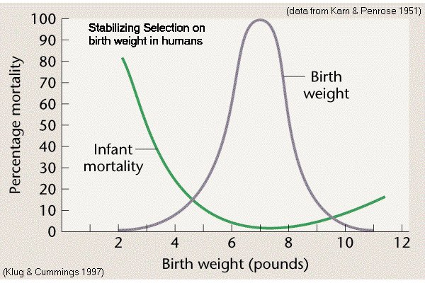 Human Birth Weight & Survival Rates